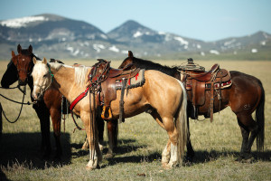 dude-ranch-horses_resized