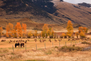 horses-elk-dome-mtn_resized